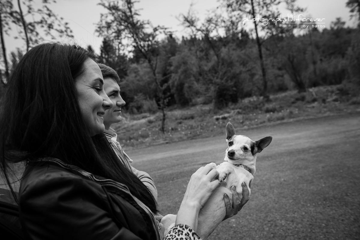 dog photography photographs monaghan