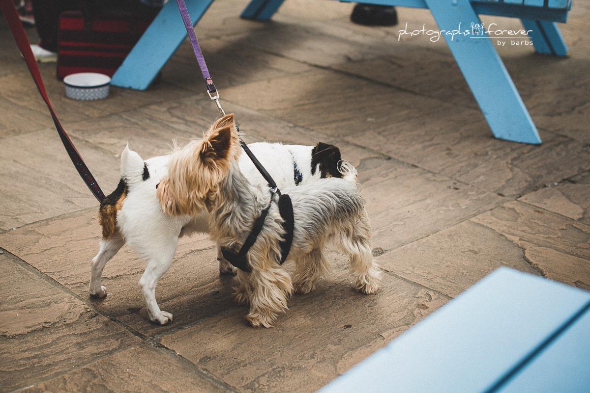 dogs photography monaghan ireland