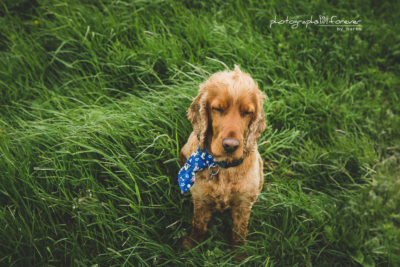 dog photography monaghan
