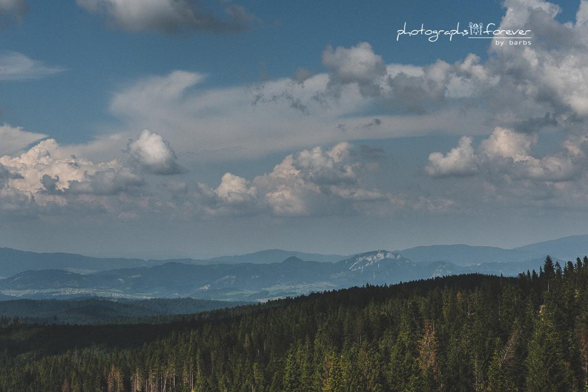 Bachledkova Bachledka Mountains Scieżka koronami drzew słowacja